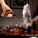 Top 10 a sörök a világában