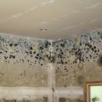 Páralecsapódás és penészedés veszélyeinek csökkentése a ház egyéb részein